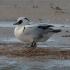Vogels in januari/februari en vogeltips voor februari/Maart 2020